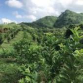 chuyển nhượng 30 ha đất đường cao tốc huyện kỳ sơn tỉnh hòa bình