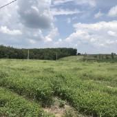 Tôi muốn bán nhanh lô đất đẹp 250m2, Huyện Chơn Thành - Bình Phước. giá 680 triệu giá rê nhất thị trường