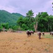 Bán đất lương sơn hòa bình 8300m2 600m đất ở view cánh đồng, có ao, thế đất bằng phẳng cách Hà Nội 40km