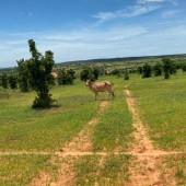 Cần bán đất nông nghiệp sổ đỏ Bình Thuận, giá đầu tư mùa dịch từ 90k/m2