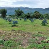 Chính Chủ Cần Bán Mảnh Vườn Giá Siêu Hấp Dẫn Tại Đinh Công Tráng, Lộc Châu